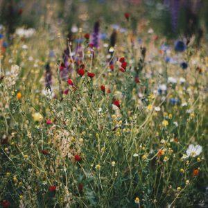 Wilde bloemen setje