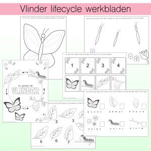 vlinder lifecycle werkbladen - noranook