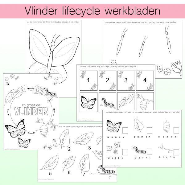 vlinder lifecycle werkbladen - noranook