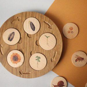 Houten levenscyclus munten- Zonnebloem