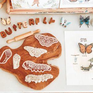 Kinfolk Monarch Butterly LifecycleEco Cutter